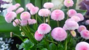 茸みたいな花