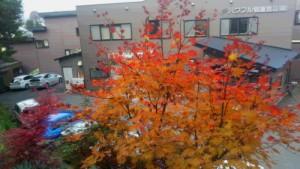 長野県信濃町の紅葉