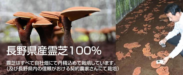 長野県産霊芝100%